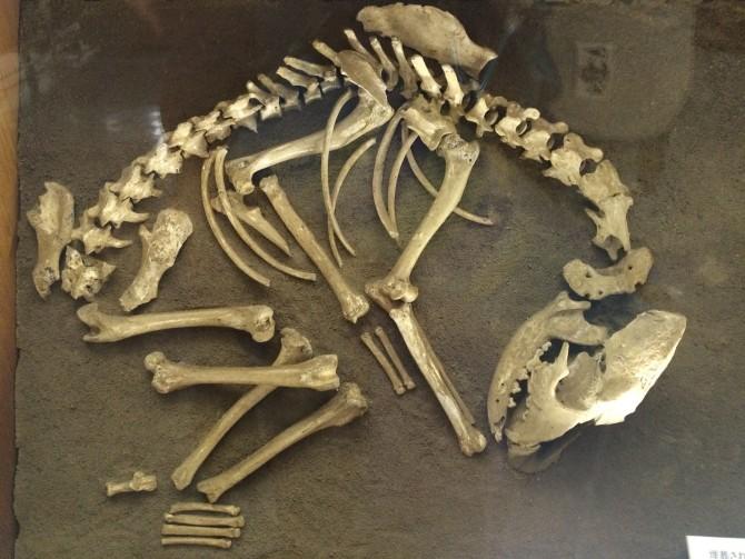 丁寧に埋葬された犬の白骨は犬が人間のパートナーだったことを示す